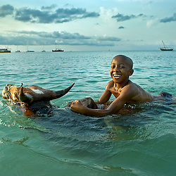 Mahefa swims with a zebu in the ocean in a village outside of Nosy Be, Madagascar November 2010.