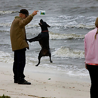 A Cedar Key, Florida resident plays with his dog as waves roll in from Tropical Storm Alberto on to the shores of Cedar Key June12, 2006. REUTERS/Scott Audette