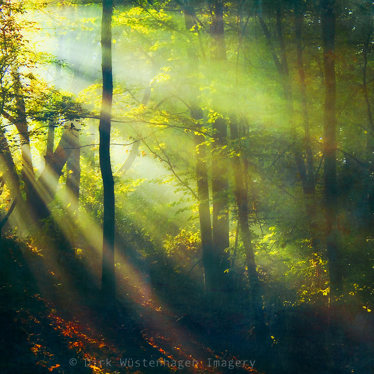 Rays of sun light in a misty forest - textured photograph<br /> Society6 Products: http://bit.ly/2p7Y4H4