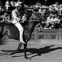The Onda district horse