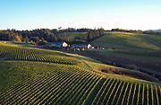 Aerial view over WillaKenzie Estate Vineyards, Yamhill-Carlton, Willamette Valley, Oregon