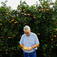 BRADENTON, FL -- January 13, 2009 -- Field representative for fruit procurement Rick Langford cuts into a Valencia orange at the SMR Farms orange grove, one of over a hundred groves in Florida where Tropicana gets its oranges for juicing, in Bradenton, Fla., on Tuesday, January 13, 2009.   Pepsico has paired up with Carbon Trust to measure their carbon footprint in the making of Tropicana Pure Premium Orange Juice, a task they are going to apply to their other brands.  (Chip Litherland for The New York Times)