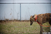 Greyhound Rescue emotion