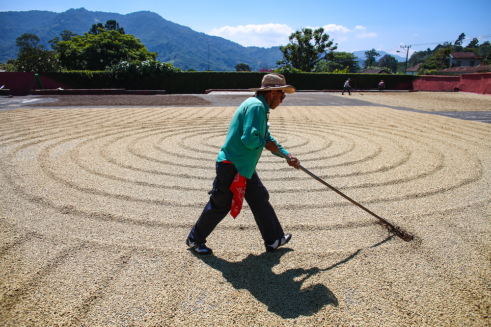 Drying patios at Bella Vista coffee farm are shown during the 2016 Starbucks Origin Experience for Partners. Photographed in January 2016. (Joshua Trujillo, Starbucks)
