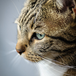 Murderface - Cat
