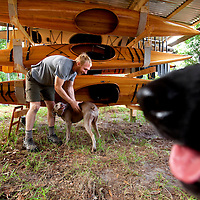 LIVE OAK, FL -- September 30, 2010 -- Boatwright Aaron Wells of Cypress Kayaks LLC, plays with his dog, Isabella, near a stock of hand-made kayaks at his workshop in Live Oak, Fla., on Thursday, September 30, 2010.  (Chip Litherland for Bay Magazine)