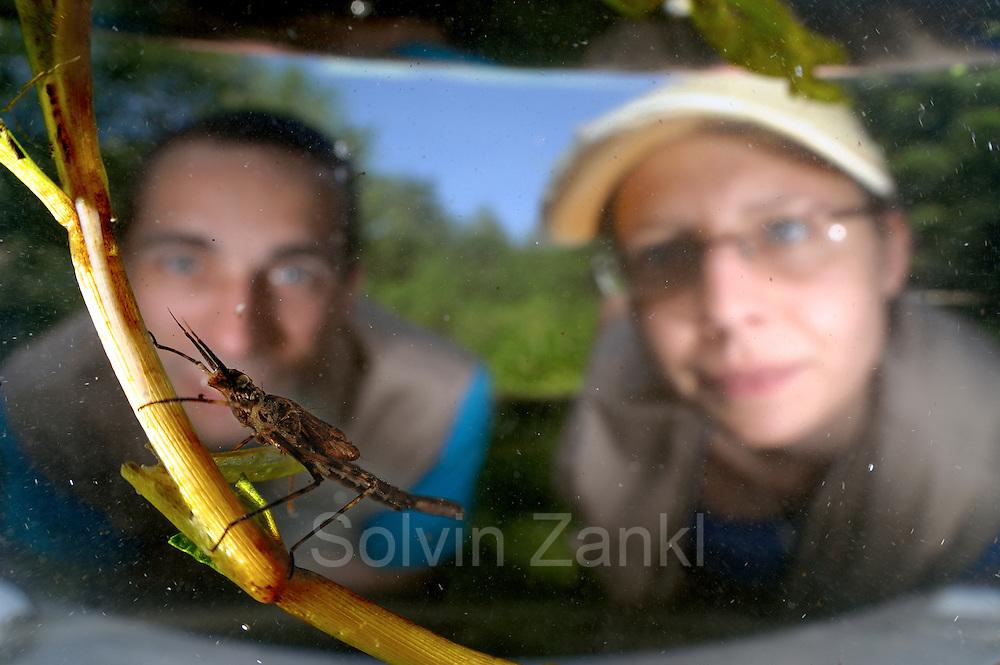 rechts: Marlen M&auml;hrlein (Limnologie von Fluss-Seen) und<br /> links: J&uuml;rgen Schreiber (Experte f&uuml;r Makrozoobenthos mit Gro&szlig;krebsen) beobachten eine  Kleinlibellenlarve der Geb&auml;nderten Prachtlibelle (Calopteryx splendens)
