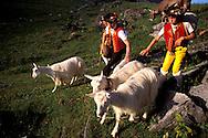 Alpaufzug, Treck to summer pasture, Swiss Alps, Appenzell Canton, Switzerland