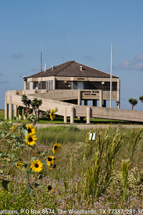 Park headquarters, and sunflowers, Mustang Island State Park, Costal, Texas.