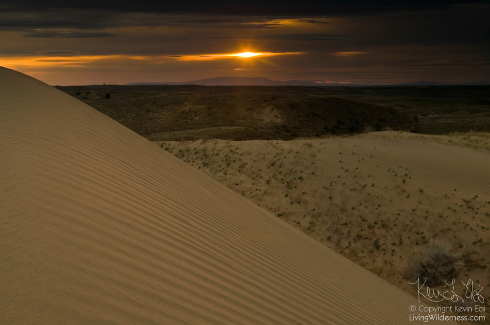 The Juniper Dunes Wilderness, northeast of Pasco, Washington, is home to the largest sand dunes in Washington state. The dunes, some of which are as much as 100 feet high, are located in what was essentially a flood basin at the end of the last ice age.