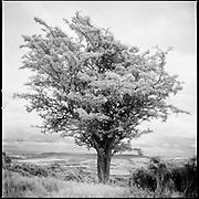 Exmoor   Monochrome