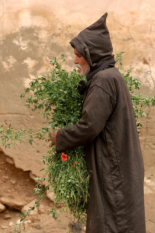 Old man with hay walking in city,Tiznit , Morocco