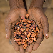 Cocoa farmer Lawson Lanquaye Mensah, 70, holds a handful of dry cocoa beans on his farm in the town of Assin Adadientem, roughly 100km west of Ghana's capital Accra on Sat. January 21, 2007. The cocoa industry employs more people than any other sector in Ghana, and cocoa is the country's second export (after gold). Ghana is the world's second largest producer of cocoa - only Cote d'Ivoire produces more.
