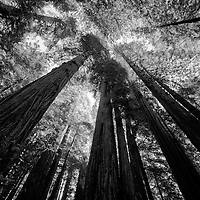 Redwoods | Northern California