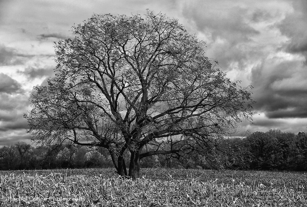 &quot;Loner&quot; B&amp;W<br />