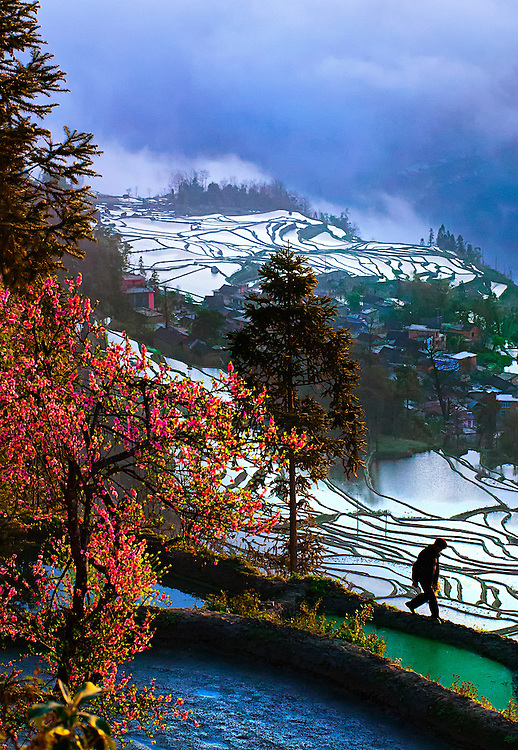 Some of the Hani rice terraces at sunrise in Yuanyang, Yunnan, China