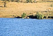 Battle at Kruger No. 8