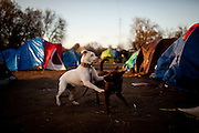 Dogs play at the SafeGround camp in Sacramento, Calif., January 13, 2011.