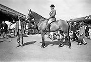 09/08/1967<br /> 08/09/1967<br /> 09 August 1967<br /> R.D.S. Horse Show 2nd day at Balls bridge, Dublin. Photo shows Mr. Gerry Callaghan riding &quot;Piltdown&quot; the property of Mr. Oliver McConnell, Dromore, Omagh Co. Tyrone.
