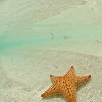 Seastar on a sandy bottom.  San Blas Islands.