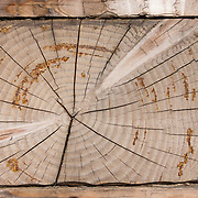 A cross section of sawed timber forms a radial pattern on a restored building at Fort Ross State Historic Park, California, USA. Fort Ross State Historic Park preserves a former Russian colony (1812-1842) on the west coast of North America, in what is now Sonoma County, California, USA. Visit Fort Ross and dramatic coastal scenery 11 miles north of Jenner on California Highway One.  Renamed ?Ross? in 1812 in honor of Imperial Russian (Rossiia), Fortress Ross was intended to grow wheat and other crops to feed Russians living in Alaska, but after 30 years was found to be unsustainable.