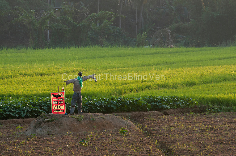 Scarecrow with sign for an English tuition class. Pelmadulla - Ratnapura road.