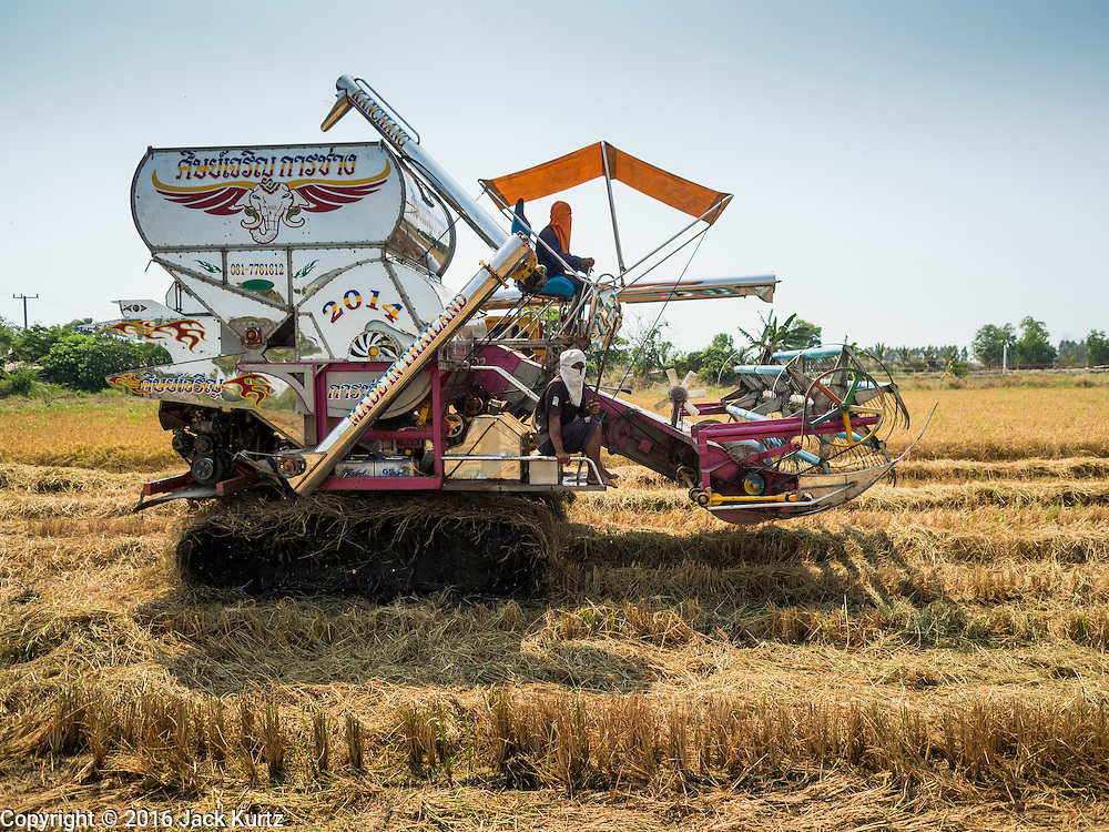 16 MARCH 2016 - BANG SOMBUN, NAKHON NAYOK, THAILAND: Workers on a mechanical rice harvester bring in the last of the 2015 rice crop in Nakhon Nayok province. Normally the farmers would plant a second crop of rice but they can't this year because their won't be enough water to irrigate the fields. The drought in Thailand is worsening and has spread to 14 provinces in the agricultural heartland of Thailand. Communities along the Bang Pakong River, which flows into the Gulf of Siam, have been especially hard hit since salt water has intruded into domestic water supplies as far upstream as Prachin Buri, about 100 miles from the mouth of the river at the Gulf of Siam. Water is being trucked to hospitals in the area because they can't use the salty water.      PHOTO BY JACK KURTZ