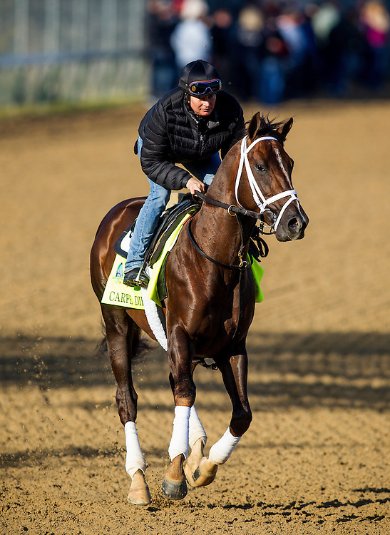 April 29, 2015: Carpe Diem gallops in preparation for the Kentucky Derby at Churchill Downs Louisville Ky. Alex Evers/ESW/CSM