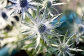 Botanicals_S