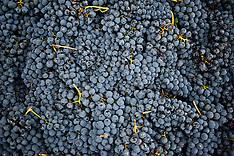 London Cru urban winery receives Barbera from Italy