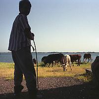 Cattle herders with their livestock near the Tadjikistan border. Uzbekistan