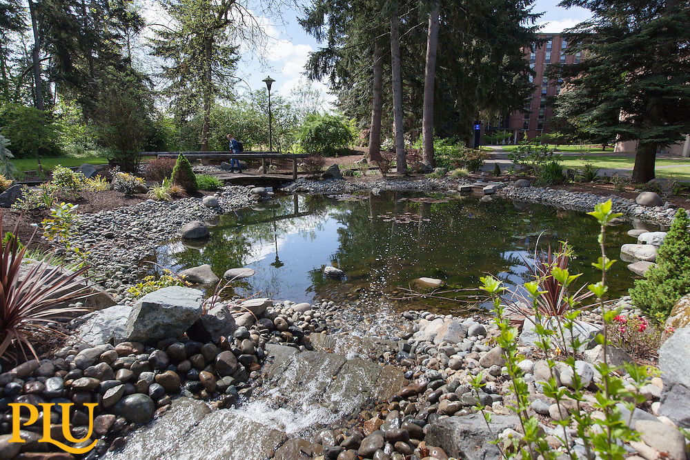 Pond and bridge on lower campus at PLU on on Tuesday, April 26, 2016. (Photo: John Froschauer/PLU)