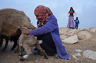 woman from the tribe of El-Azazme work with the sheeps.  Photo by Oren Nahshon