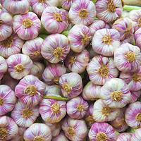 A pile of Garlic at a farmer's market