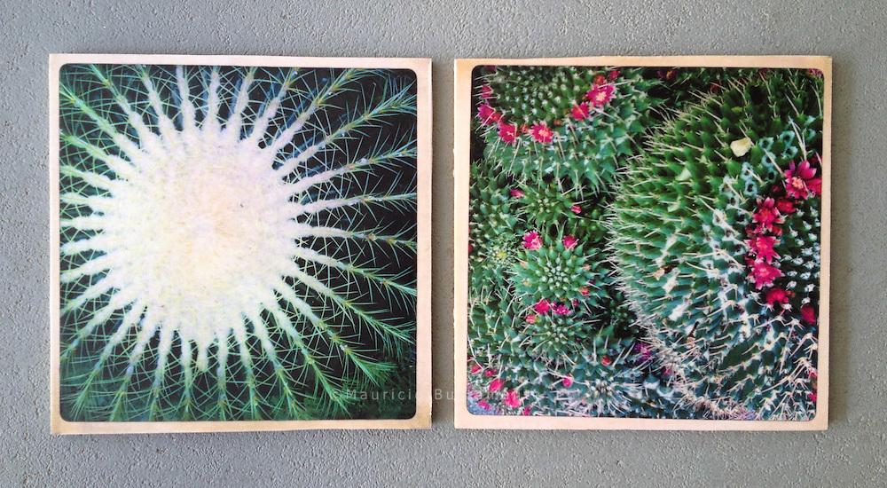 Serie Verde. Photography, C-Print with wax, 23.05.2013. 20 x 20 cm Nero Pécora/La pared ©2013