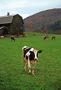 Image of a farm near Chelsea, Vermont, American Northeast