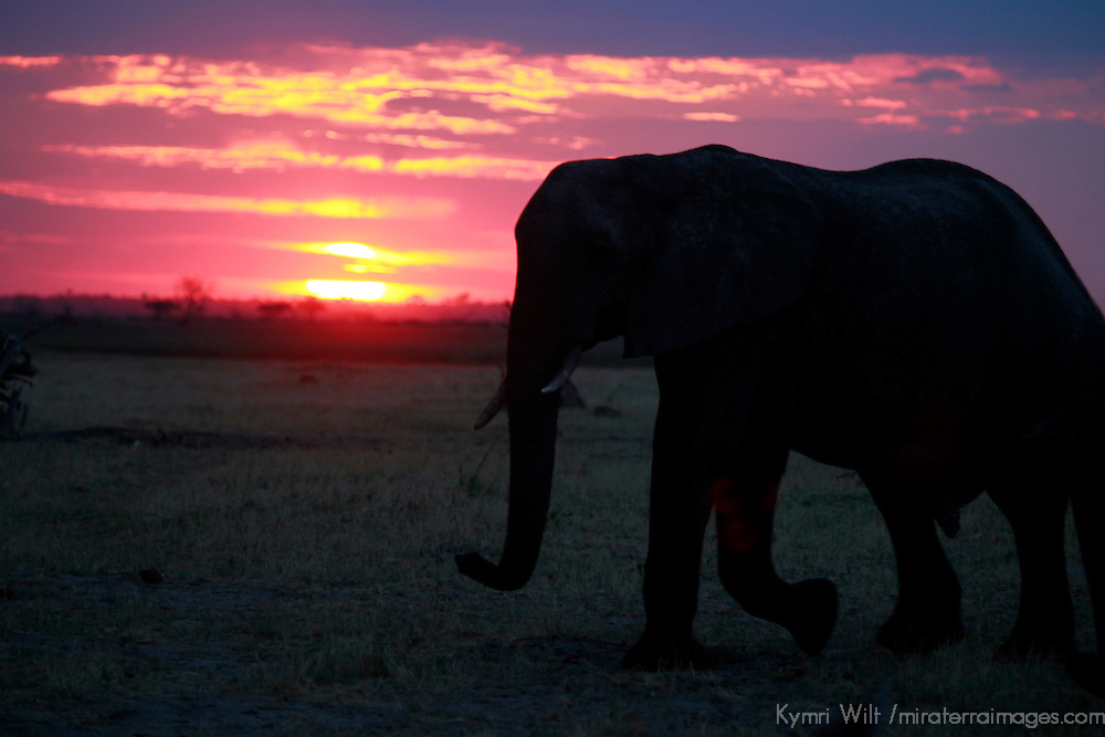 Africa, Botswana, Savute. Elephant and sertting sun at Chobe National Park.