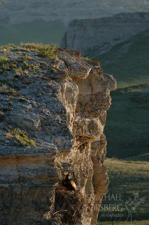 Among high buttes, a golden eagle sits on cliff nest in evening light. Sioux County, Nebraska.