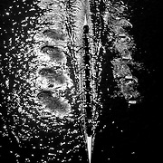 Head of the River Rowing Regatta, Hartford, Connecticut, USA. 2014