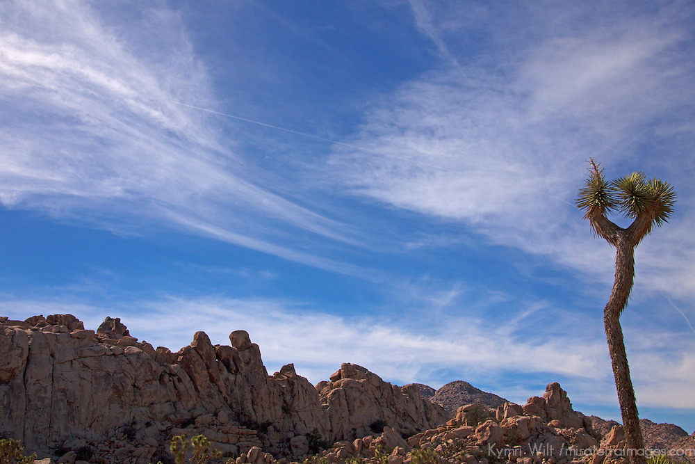 USA, California, Joshua Tree. HIdden Valley in Joshua Tree National Park.