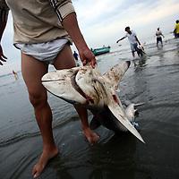Fishermen bring in their catch of sharks in Manta, Ecuador on April 15, 2008. (Photo/Scott Dalton).