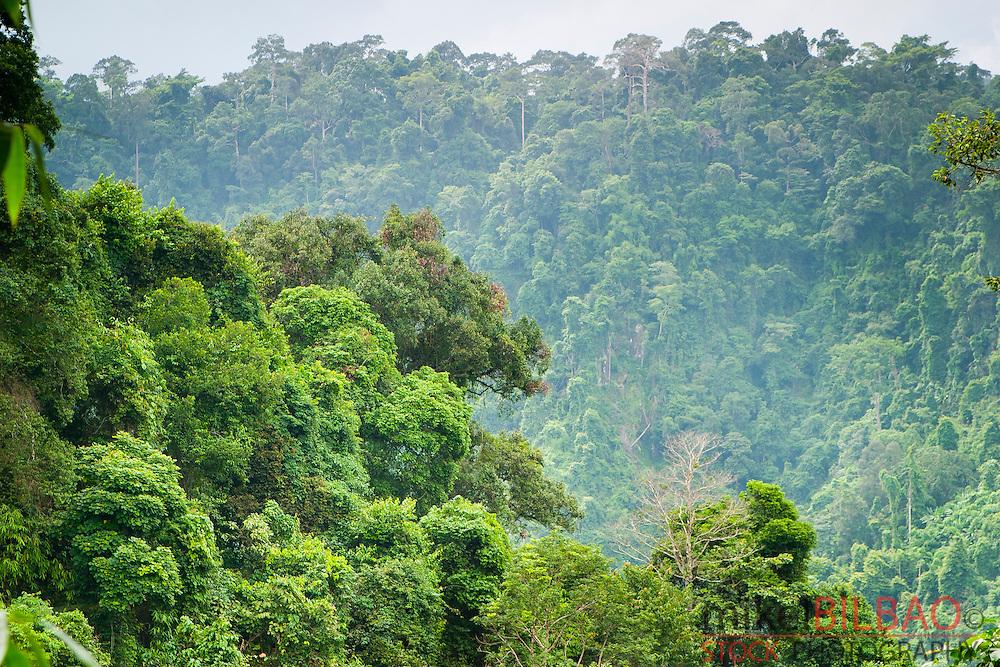Rainforest. Khao Yai National Park. Thailand.