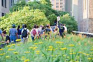 High Line Tours