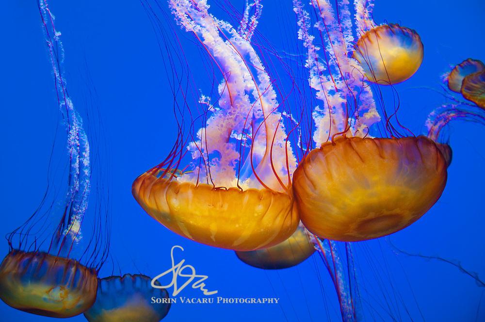 Visiting the Monterey Bay Aquarium