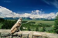 Australian Shepherd, Teton Range, Grand Teton National Park, Snake River, Wyoming<br /> PROPERTY RELEASED