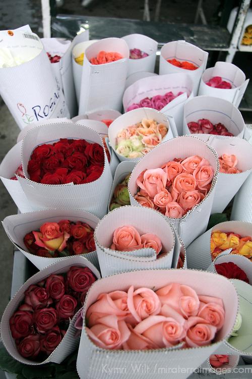 South America, Ecuador, Cayambe. Fresh Roses Packaged for Export at Rosadex Plantation.