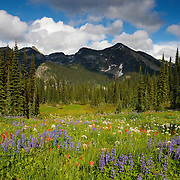 A variety of wildflowers, Indian paintbrush and lupine, grow in a high alpine meadow in Revelstoke National Park, Canada.