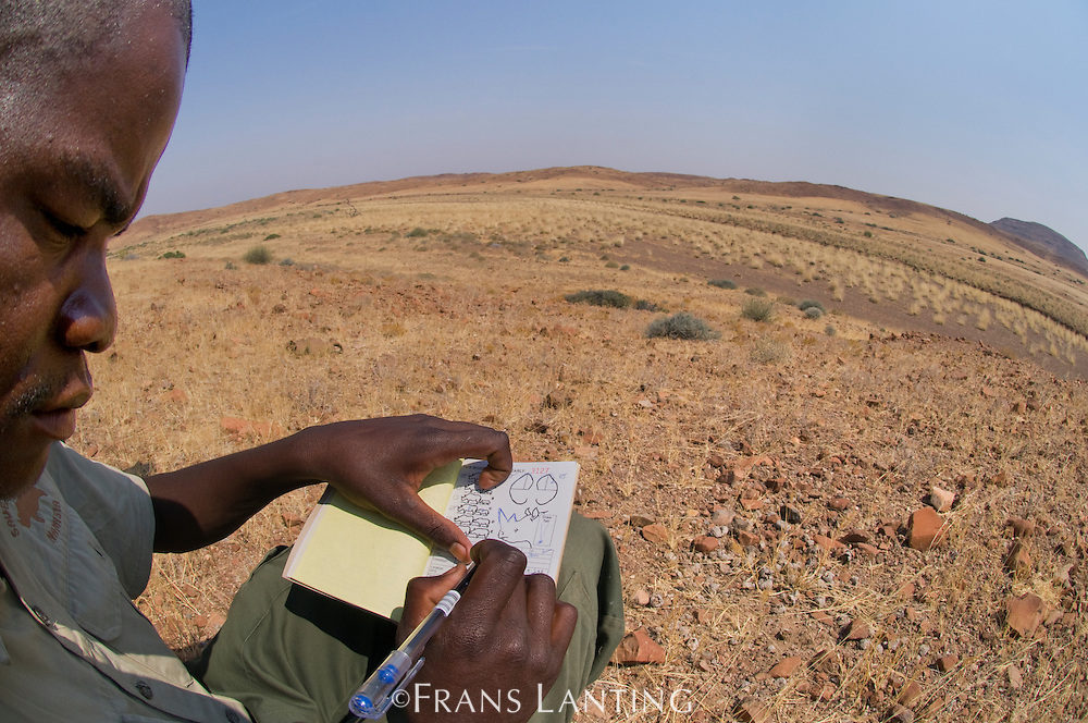 Field scout recording desert black rhino data, Save the Rhino Trust, Palmwag, Torra Conservancy, Damaraland, Namibia