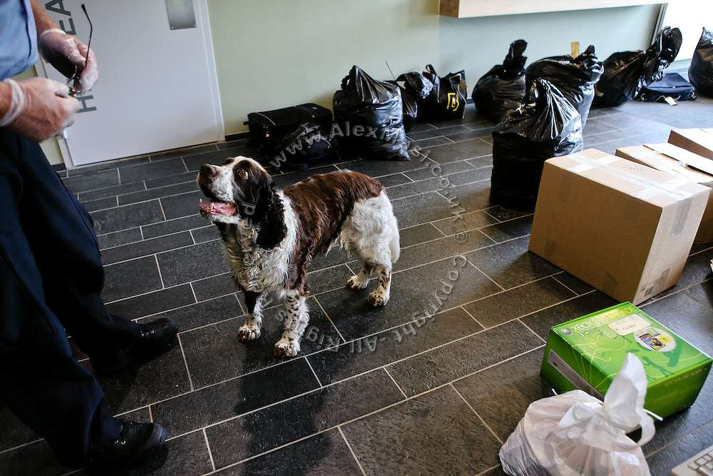 A sniffer dog is waiting for orders to begin walking through bags owned by new arrivals at the luxurious Halden Fengsel, (prison) near Oslo, Norway.