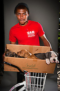 Trevaun Turney with a box full of pit bull puppies.